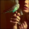 delight: girl with parakeet (serious consultation)