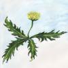 wyld_dandelyon: An exuberant dandelion I painted (dandelion art)