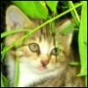 rainydaycat: (kitty)