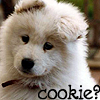 smeddley: (Cookie?)