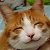 aikonamika: (Kitty smile)