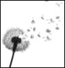 pameclunes: (dandelion)