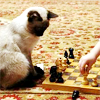 metatxt: siamese kitteh who looks like my kitteh Jpeg sits on the beach playing chess with human off-camera (art: jpeg plays chess)