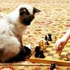 metatxt: siamese kitteh who looks like my kitteh Jpeg sits on the beach playing chess with human off-camera (art: jpeg plays chess)