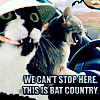 "metatxt: lolcat macro mashup with fear and loathing in las vegas, cats in car look out ""we can't stop here, this is bat country"" (art: lol bat country)"