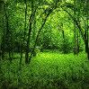 hiroe: (green)