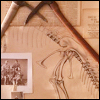quillori: sketch of dinosaur bones, with picks and b&w photo, presumably of early archeologists (primeval: sketch)