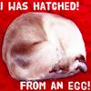st_aurafina: (Baggins was hatched!)