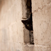 lizcommotion: black cat head poking out from behind a wall (cat hiding)