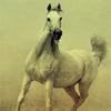 st_aurafina: (Horse)