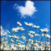 estrella_bonita: (Blue Skies)