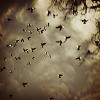 glass_icarus: (birdcloud)