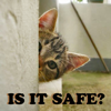 rustingwillpowr: (is-it-safe? kitty)