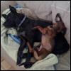 janinedog: (dogs)
