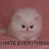 serene: lolcat hates everything (i hate everything)