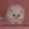 serene: lolcat hates everything (i hate everything)
