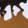 khana: a cats shadow (Katze - Schatten)