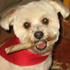 sugar_cookie: (Nacho with Bone 2)
