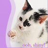 leni: (kitten - shiny)