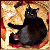 yakalskovich: (Mephisto, Canoodling kitties, Lucifer the cat)