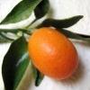 kumquatix: kumquatix (Default)