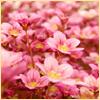 armadillo: (Pink Flowers)