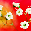 aimeelicious: (blossom_byrefuted)
