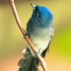 mental_squint: (Animals - Tiny Blue Bird)