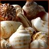 armadillo: (Shells)