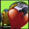 flightless: (Macaw Love)