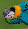 flightless: Macaw perspective (huh?, Thinking)