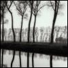 ses: (photography - trees on river bank)