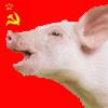ses: (misc - pig revolution)