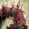 esmenet: rain on the garden that is movie-Akio's grave (rose garden)