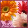 kaalee: (gerbera daisy)