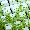 strange_loop: A keyboard with weeds sprouting out from between the keys. (keyboard)