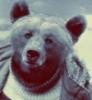 major_p: (медведь3)