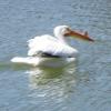onyxlynx: Bird with Bump in Beak (Beaky Bird)