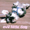 evil_little_dog: (Puppy Rogue Default)