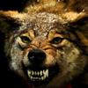 apackofone: (Wolfy)