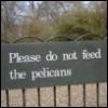 flavourofcyanide: St. James's Park (Default)