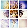 brisus: (Seasons - Tree Year Round)