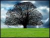 brannen: oak in summer (oak)