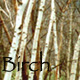 birch_household: (Birch trees) (Default)