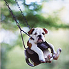 ailurophile: Dog in tire swing (dog)