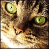 vilakins: (tabby cat)