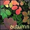 vilakins: (autumn)