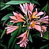 vilakins: (flower)