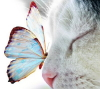twistedchick: butterfly on nose of cat that looks like Beautiful. (butterfly)
