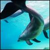 andurz: (dolphin)
